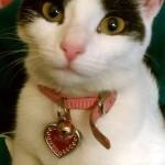 pinky-the-kitten.jpg