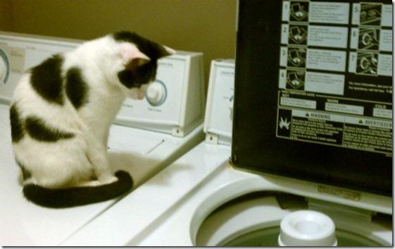Tide-Pinky-kitten-washing-machine